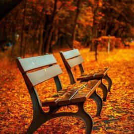 Cuida tus ojos en otoño