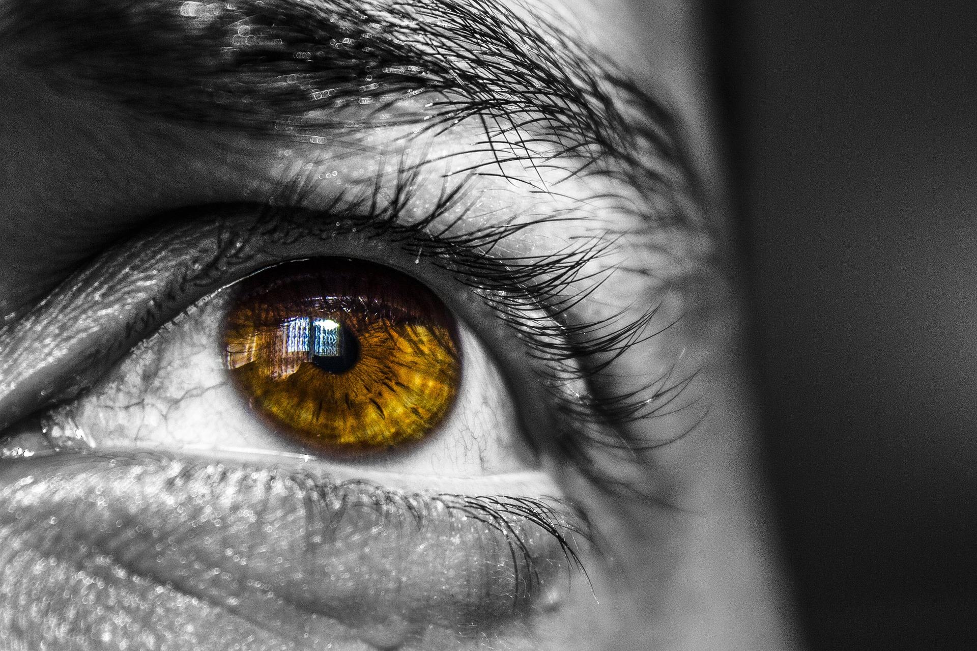 Reflejo fotomotor, ¿qué es y cuál es su función?